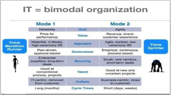Bimodal Organization Allari